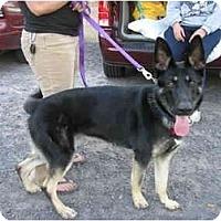 Adopt A Pet :: Dakota - Green Cove Springs, FL