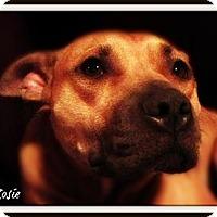 Adopt A Pet :: Rosie - Pascagoula, MS