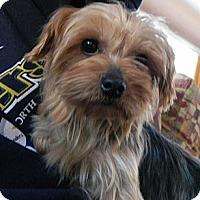 Adopt A Pet :: Curly Q - 84, PA