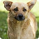 Adopt A Pet :: MIMI