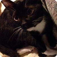 Adopt A Pet :: Keeche - Burbank, CA