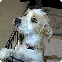Adopt A Pet :: Carla - Gilbert, AZ