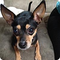 Adopt A Pet :: Charlie - Aurora, IL