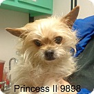 Adopt A Pet :: Princess II
