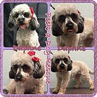 Adopt A Pet :: Daphne - South Gate, CA