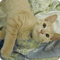 Adopt A Pet :: Champagne - Medina, OH
