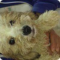 Adopt A Pet :: Wesley - Algonquin, IL