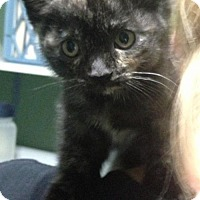 Adopt A Pet :: Briar - Caistor Centre, ON