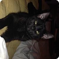 Adopt A Pet :: Hero (RW) - Little Falls, NJ