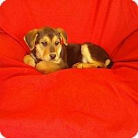 Adopt A Pet :: Harlo - Adoption Pending! - Hillsboro, IL