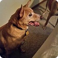 Adopt A Pet :: Bo - Hainesville, IL