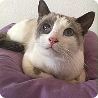 Adopt A Pet :: Rosie - Riverside, CA