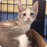 Adopt A Pet :: Lafitte - Gainesville, FL