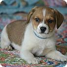 Adopt A Pet :: Noah