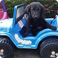 Adopt A Pet :: rocky - West Bend, WI