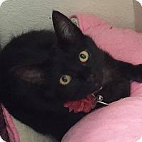 Adopt A Pet :: Tularosa - Colorado Springs, CO
