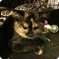 Adopt A Pet :: Gia - Gaithersburg, MD