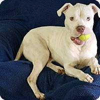 Adopt A Pet :: Gunnar - Conroe, TX