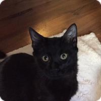 Adopt A Pet :: Shiner - Dallas, TX