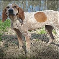Adopt A Pet :: Bayou Huntress - Shreveport, LA