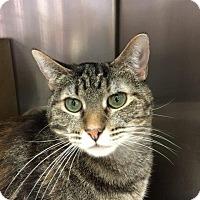 Adopt A Pet :: TJ - Cincinnati, OH