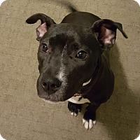 Adopt A Pet :: Victoria - Dayton, OH