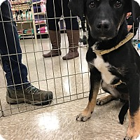 Adopt A Pet :: Flinn - Hohenwald, TN
