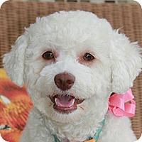 Adopt A Pet :: Phoebe - La Costa, CA