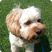 Adopt A Pet :: Crosby - Brattleboro, VT
