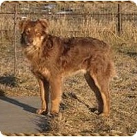 Adopt A Pet :: Oso - Needs Foster!! - Boulder, CO