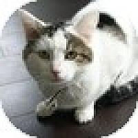 Adopt A Pet :: Clark - Vancouver, BC
