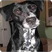 Adopt A Pet :: Lula - Scottsdale, AZ