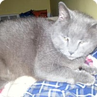 Adopt A Pet :: FIONA - LOVERGIRL 25.00 - Rochester, NY