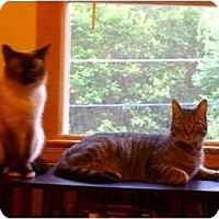 Adopt A Pet :: Asher And Spike - Little Falls, NJ