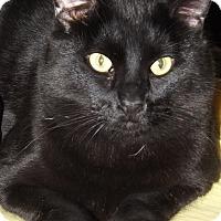 Adopt A Pet :: Magnum - Mesa, AZ