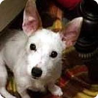 Adopt A Pet :: cricket - Rhinebeck, NY