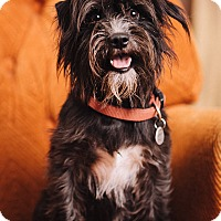 Adopt A Pet :: Rupert - Portland, OR