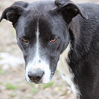Adopt A Pet :: Cooper Rubble - Wynne, AR