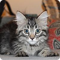 Adopt A Pet :: Marie - Irvine, CA