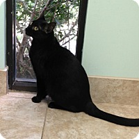 Adopt A Pet :: Chrissy - Putnam Hall, FL