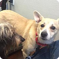 Adopt A Pet :: Underdog - Oak Ridge, NJ