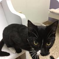 Adopt A Pet :: Ramona - Medina, OH