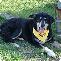 Adopt A Pet :: Jimmy Beatty - Urbana, OH