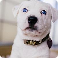 Adopt A Pet :: Prince - San Francisco, CA