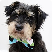 Adopt A Pet :: Taladro - Picayune, MS