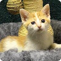 Adopt A Pet :: Sammi - Rochester, NY