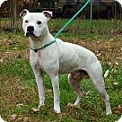 Adopt A Pet :: SPOT