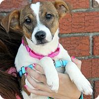 Adopt A Pet :: China - Harrison, NY