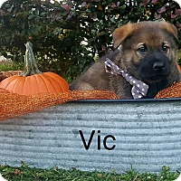 Adopt A Pet :: Vic - Gainesville, FL