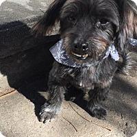 Adopt A Pet :: Danke - Aurora, CO